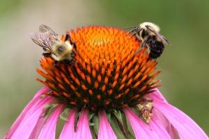 Jagged Ambush Bug, by Michelle Sharp