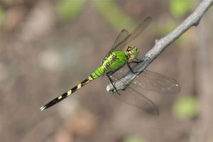 Dragonfly, July 1 2014, by Michelle Sharp