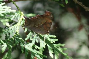 Question Mark on Cedar, July 1 2014, by Michelle Sharp