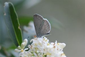 Summer Azure on Privet - June 24 2014, by Michelle Sharp