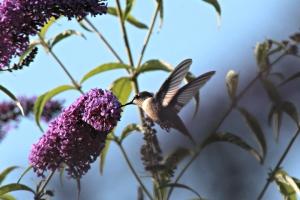 Hummingbird, by Michelle Sharp