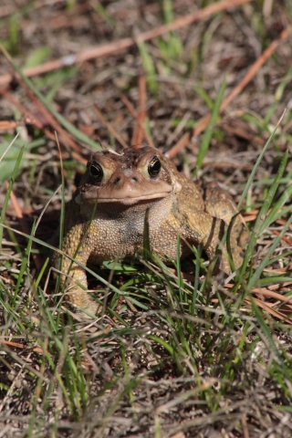 aug27_toad
