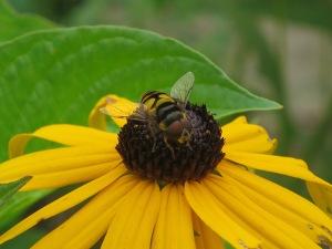 WINNER Sarah Brown Age 12 Dundas Bee Fly