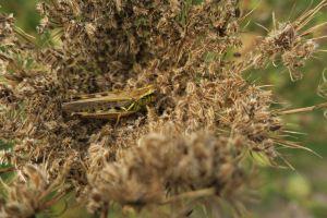 SECOND PLACE Rowan Post Age 16 Hamilton Grasshopper