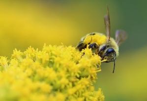 SECOND PLACE Monica Harris Copetown Honey Bee