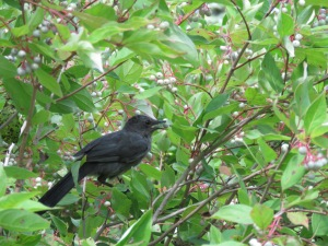 WINNER Rowan Post Age 15 Hamilton Catbird