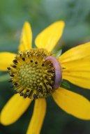 Slug photo by Michelle Sharp
