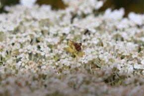 Ambush Bug photo by Michelle Sharp