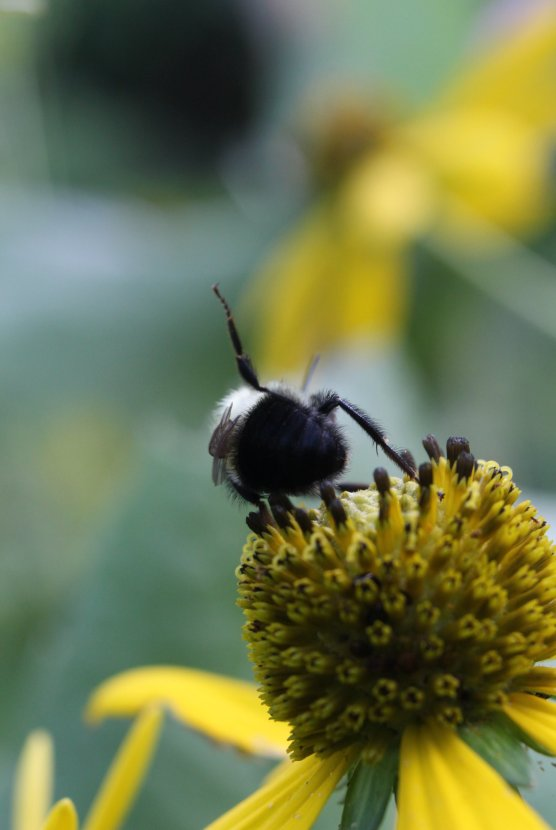 Bumblebee yoga photo by Michelle Sharp