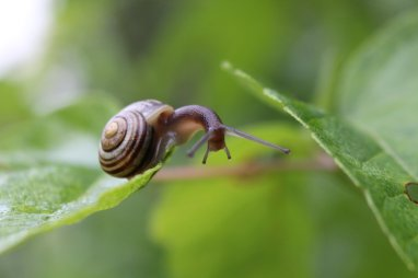 Snail photo by Michelle Sharp