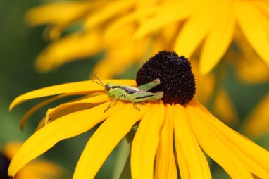 Grasshopper photo by Michelle Sharp
